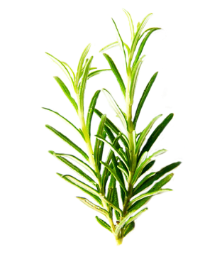 cropped-rosemary-2081980_960_720.png